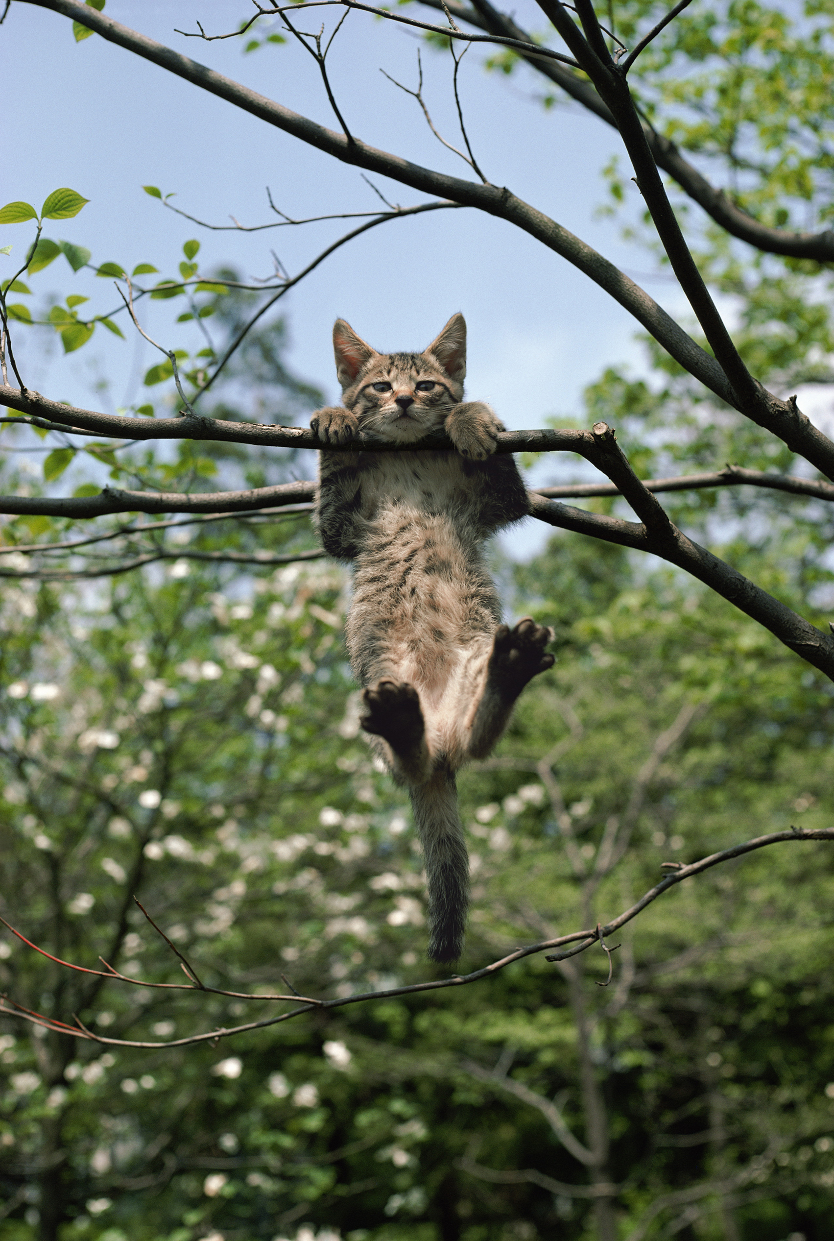 【終了】岩合光昭写真展 THE CATS ねこ科 ねこは野生動物だ。